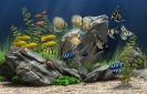 Náhled programu Dream Aquarium Screensaver. Download Dream Aquarium Screensaver